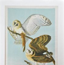 Image of Lithograph - Barn Owl