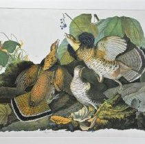 Image of Lithograph - Ruffed Grouse