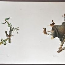 Image of Lithograph - Bewicks Wren and House Wren