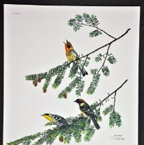 Image of Print - Spring Warblers I, Plate XXV