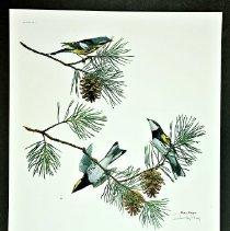 Image of Print - Print, Spring Warblers II