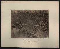 Image of Albumen - Laurel Brake Near Harpers Ferry, Va