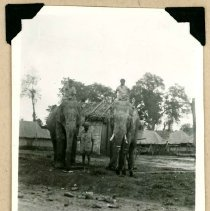 Image of Print, Photographic - Unidentified Villagers on Elephants