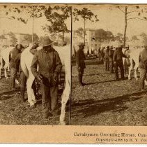 Image of Stereoview - Cavalrymen Grooming Horses, Camp Tampa, Fla.
