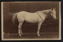 Image of Print, Photographic - Pilot the war horse of Lt. W. Ben Palmer
