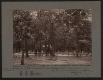 Image of Print, Photographic - Trench on Battlefield at Shiloh in which Confederate Soldiers are Buried