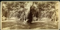 Image of Stereograph - View of United States National Cemetery, Vicksburg, Mississippi. Tree line avenue.