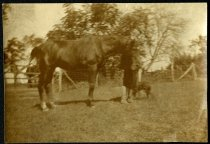 Image of Photograph - Allen Christian Redwood with horse and dog