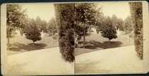 Image of Stereograph - View of United States National Cemetery, Vicksburg, Mississippi. Magnolia tree with grave statue