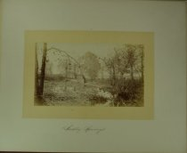 Image of Albumen - Sudley Springs