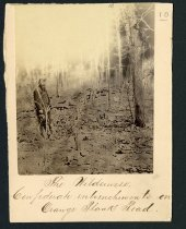 Image of Albumen - The Wilderness, Confederate entrenchments on Orange Plank Road.