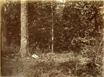 Image of Albumen - Scene of General James B. McPherson's Fall