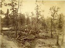 Image of Albumen - Wilderness