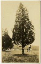 "Image of Print, Photographic - ""Jackson Cedar"" monument"