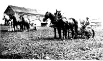 Image of Farming with Horses - JMS DeKalb Co. 1837-1987 Collection