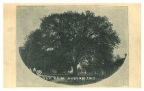 Image of Old Elm Tree - John Bry Postcard Collection