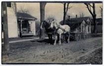 Image of Two Horses and a Buggy Postcard - John Martin Smith Postcard Collection