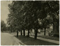 Image of Street lined with trees and houses hidden behind them - John Martin Smith Miscellaneous Collection