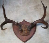 Image of Antler Mount 2353.001