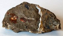 Image of Pecten sp., Scallop Fossil