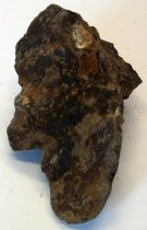Image of Mytilus sp., Saltwater Mussel Fossil