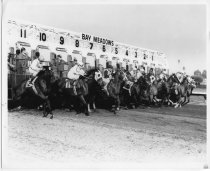 Image of 2014.027 - The Bay Meadows Racecourse records documents the activities of the organization and of the founder, William P. Kyne, from 1901-2008.  The bulk of the materials consist of photographs, clippings and audiovisual materials from 1936-2008.  The photographic images consist of photographs, photograph albums, slides, negatives, proof sheets, digital images and a small number of souvenir photographs from restaurants.  There is also a large number of clippings and scrapbooks as well as audiovisual materials in the form of 16mm reels, videocassettes, audiocassettes and DVDs.  The audiovisual materials are predominantly recordings of races. Among other formats in the collection is a small amount of correspondence, publications, meeting notices, as well as artifacts such as awards, calendars, plaques, certificates and posters. 