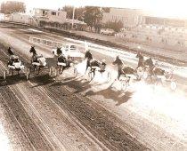 Image of 2014.027.016.025 - Harness and Quarter horses, circa 1934-2008