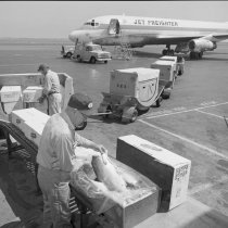 Image of 2015.001.09221. - Fresh Fish Cargo Shipment on United Jet Freighter at San Francisco International Airport, 1966