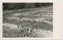 Image of 2016.015.001.56 - Untitled (field of grasses), c. 1966-1975