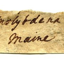 Image of Historic label for Molybdenite, 1297.