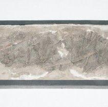Image of Extracrinus briareus, 00.13115.