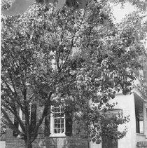 Image of 34 Anson Street