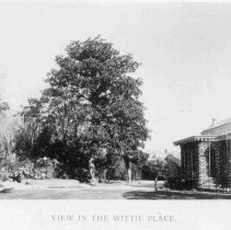 Image of View in the Wittie Place - 1893