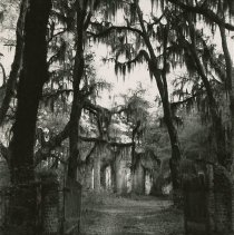 Image of The Elms [Plantation] - early 20th c.