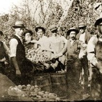 Image of Apple Pickers - 69-1373 wfchs