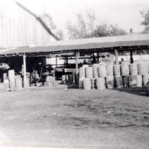 Image of Apple processing at Bell farm