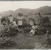 Image of 1926.36.15 - Print, Photographic