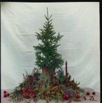 Image of Lantern slide, color, of a tall Christmas evergreen centerpiece, berries, pine cones, candle,used for promotional display,Hoboken, no date, ca. 1920. - Transparency, Lantern-slide
