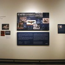 Image of Digital images, 227, of exhibit, City Animals, at HHM, 2004. - Print, Photographic