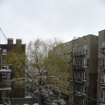 Image of Three digital images of a weeping willow tree in the backyard of 724 Willow Ave., Hoboken, March 20, 2004. - Print, Photographic