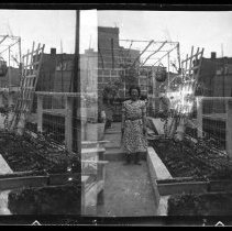 Image of full negative strip
