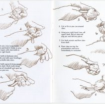 Image of pg [24] + inside back cover: illustrated instructions on how to shuck clams