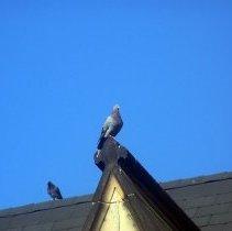 Image of 36: fleur de lys stone crest detail on gablet; pigeons