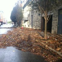 Image of Color photos, 7, taken after Hurricane Sandy by Laura Sannitti, Hoboken, Oct.30, 2012. - Photograph