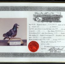 Image of Pigeon Diploma for Hillside Loft of Hoboken, N.J. racing pigeon, Sept. 9, 1990.