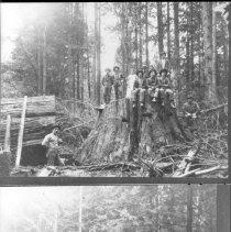 Image of Fallen cedar at Difley Bolt Ca