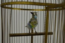 Image of Birdcage- bird