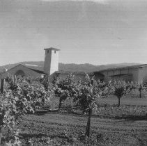 Image of 1973.6.23 - Collection of Robert Mondavi Winery