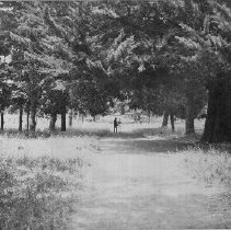 Image of 1988.22.10 - Men walk on road at Soscol Ranch