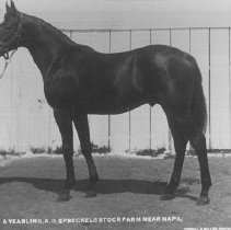 Image of 2002.43.162 - Spreckels Stock yearling